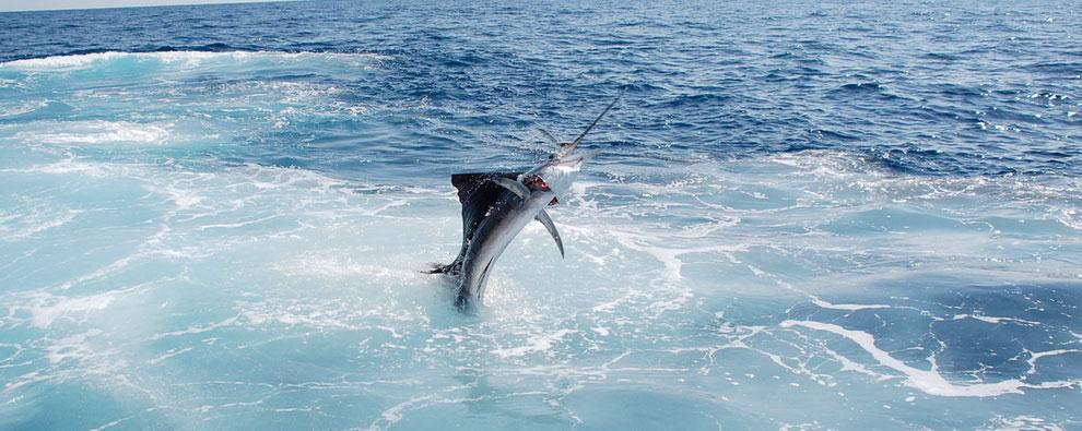 10541_sportfishing_crm.jpg
