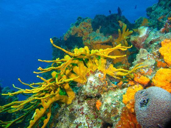 14140_aquaworld_coral.jpg