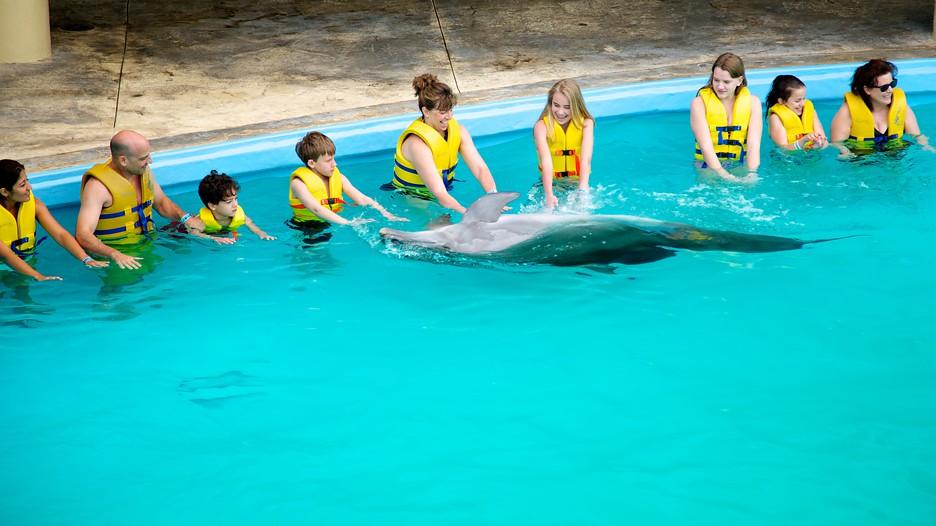 31905_Acuario-Interactivo-Interactive-Aquarium-34030.jpg