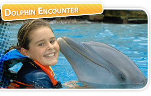 33637_dolphin_encounter.jpg