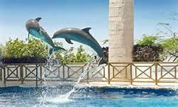 39541_salto-delfines1.jpg