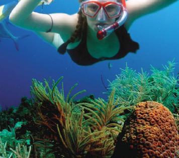 46649_catamaran_snorkeling_fish.jpg