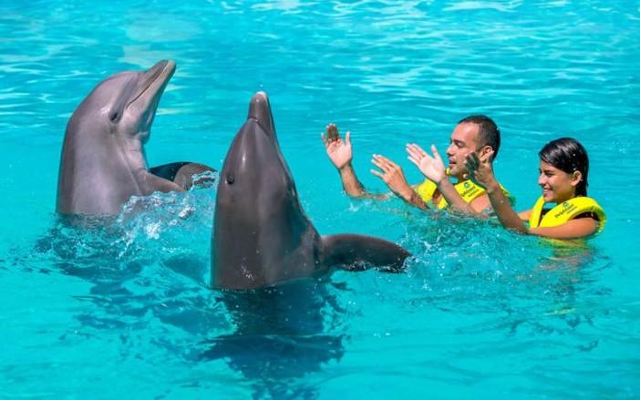 52376_acuario-cancun-delfines.jpg