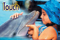 56616_delfin_touch.jpg