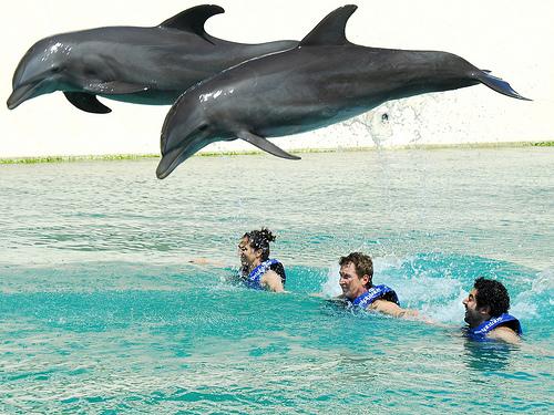 73828_dolphinus07.jpg