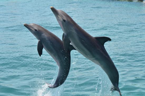86443_salto-delfines.jpg