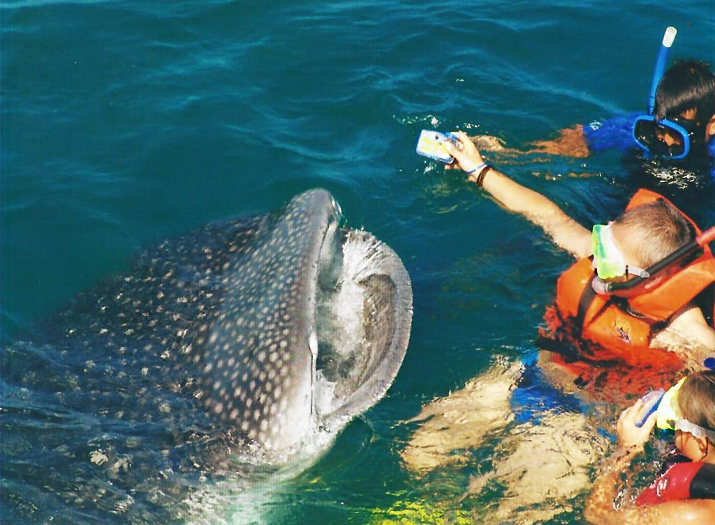 86664_tour-tiburon-ballena_04.jpg