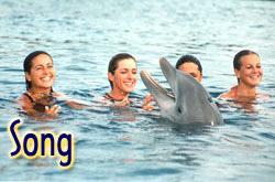 86697_delfin_singing.jpg
