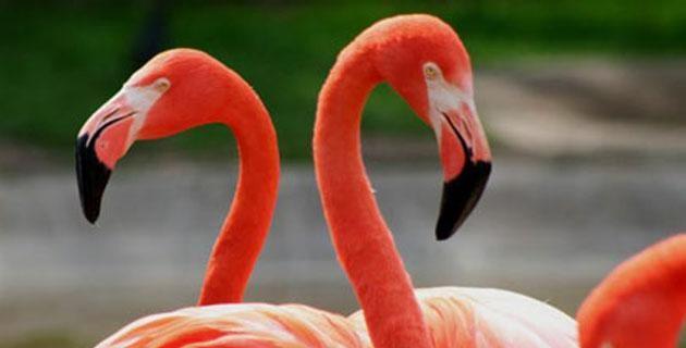 15644_flamencos-celestun.jpg